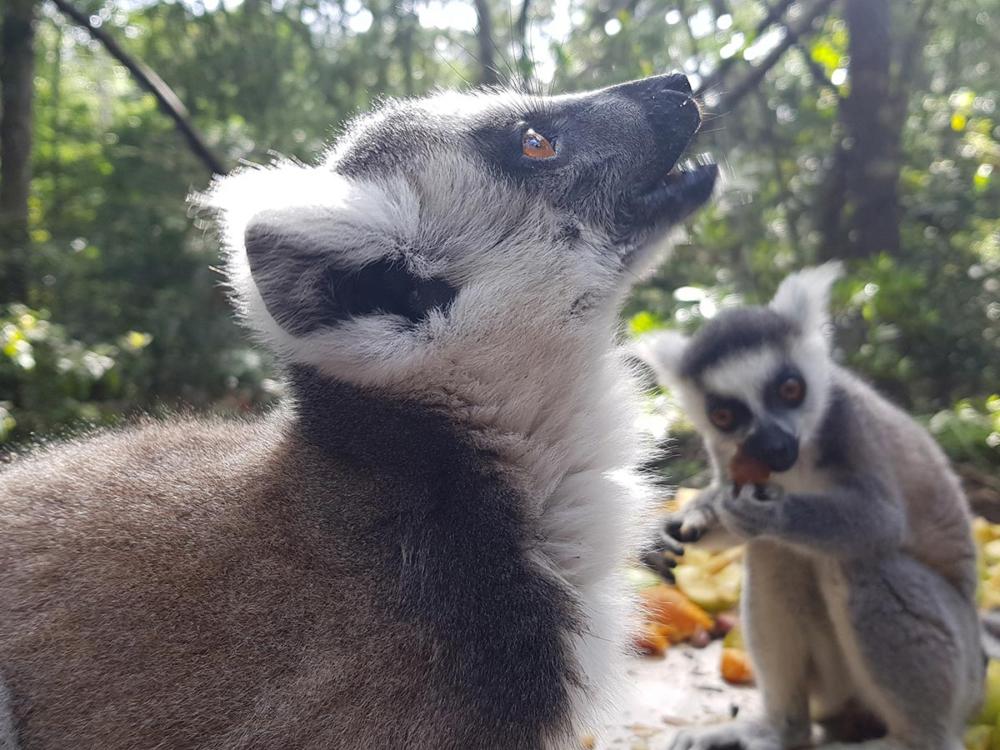 Lemuren im Monkeypark
