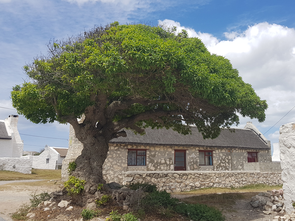 Zu Gast in Arniston